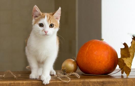 cat-2908286_1280
